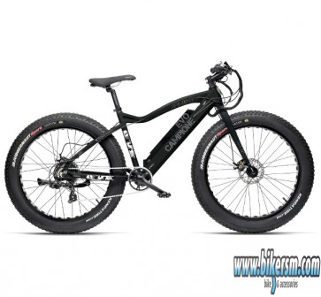 Fat bike Evolution Campione Armony